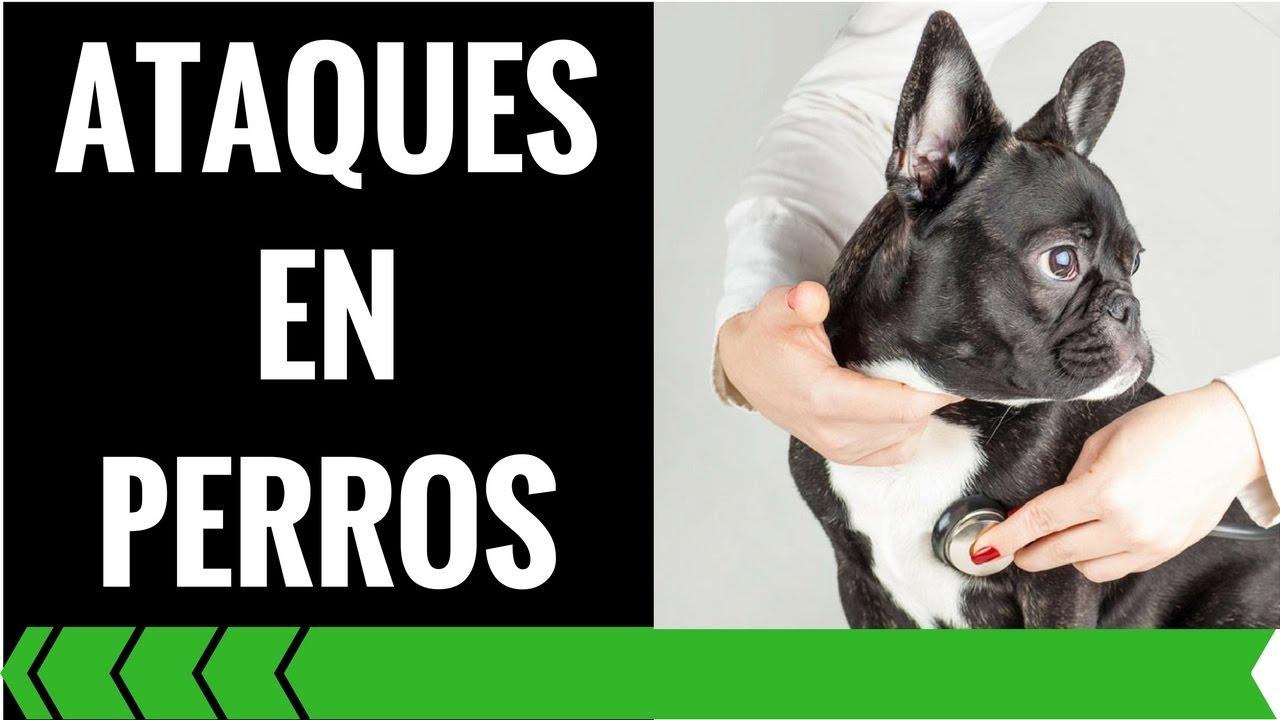 micción frecuente y convulsiones en perros