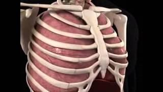 Anatomia del Corazon 1 Diagnostico X