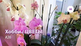 48#26 / Хобби-Цветы / СТРАННОЕ ПЯТНО НА ЛИСТИКЕ ОРХИДЕИ. ЧТО ЭТО? В ГОСТЯХ У МАРИНЫ И ОБЗОР (ВЕСНА)