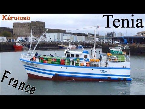 Fileyeur ; Tenia ; Bayonne ; Port De Pêche ; Kéroman ; Lorient ; Bretagne ; France