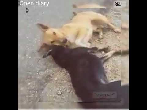 Meri Zindagi Savari Dog Version || Dog Friendship || Drive Carefully