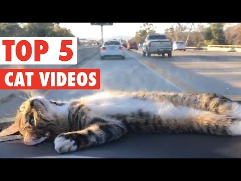 Top 5 Cats of the Week May 2016