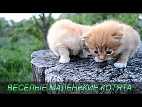 Фото мир природы - o-