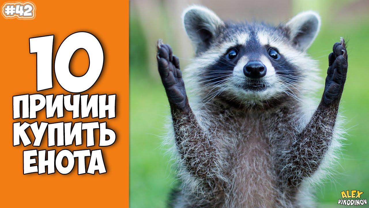 10 ПРИЧИН КУПИТЬ ЕНОТА - Интересные факты!