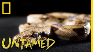 Slither On Over to See This Boa | Untamed