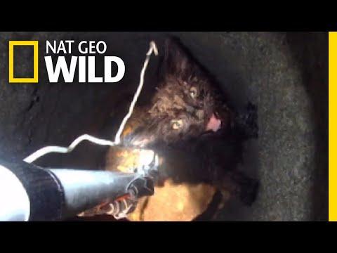 Watch a Daring Rescue of a Kitten From Deep Underground | Nat Geo Wild
