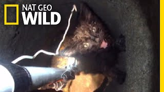 Watch a Daring Rescue of a Kitten From Deep Underground | Nat Geo Wild