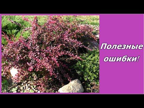 видео: Как я исправляла свои ошибки в саду. ))) Садовые композиции и дизайн сада своими руками.