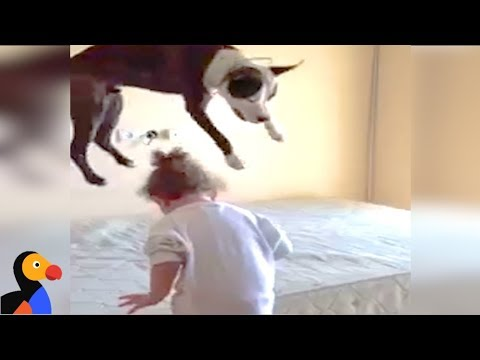 Dog LOVES Jumping On The Bed   The Dodo - YouTube