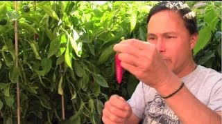 How to Grow Foods with the Highest Nutrient Density & Best Taste