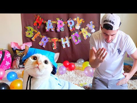EPIC BIRTHDAY of MAUI BOY! | The Hungry Kitten Wanderer 😹
