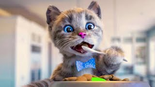 LITTLE KITTEN ADVENTURE  CUTE PLAYFUL KITTEN ON THE GO  LONG VIDEO