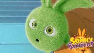 Sunny Bunnies | Avalanche de coelhos | Desenhos animados | WildBrain em Português