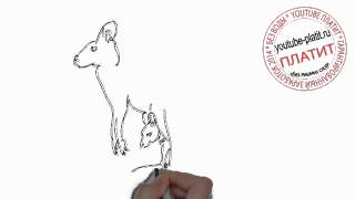 Как карандашом нарисовать маму кенгуру с ребенком