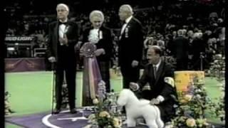 2001 Westminster Dog Show