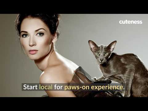 Could Your Cat Be A Professional Model?