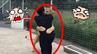 Lion Sees His Adoptive Father After 7 Years!!!