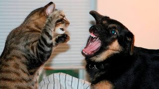 cats and dogs | funny cats vs dogs - funny animals compilation