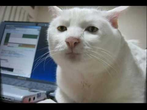 Корм для кошек  1st Choice  Отзывы покупателей