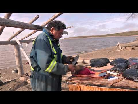 10 10 Uumatimnin 'Whaling on the Coast'