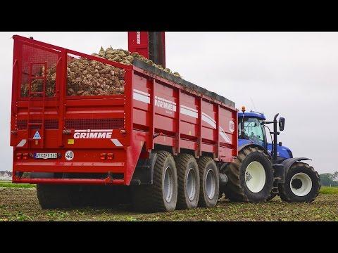 Chasing Sugar Beet | Holmer T4-30 bunker harvester & Grimme Beet Chaser | Breure Klaaswaal