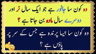 Фото General Knowledge Paheliyan  N Urdu Urdu Puzzles With Answers Common Sense Test