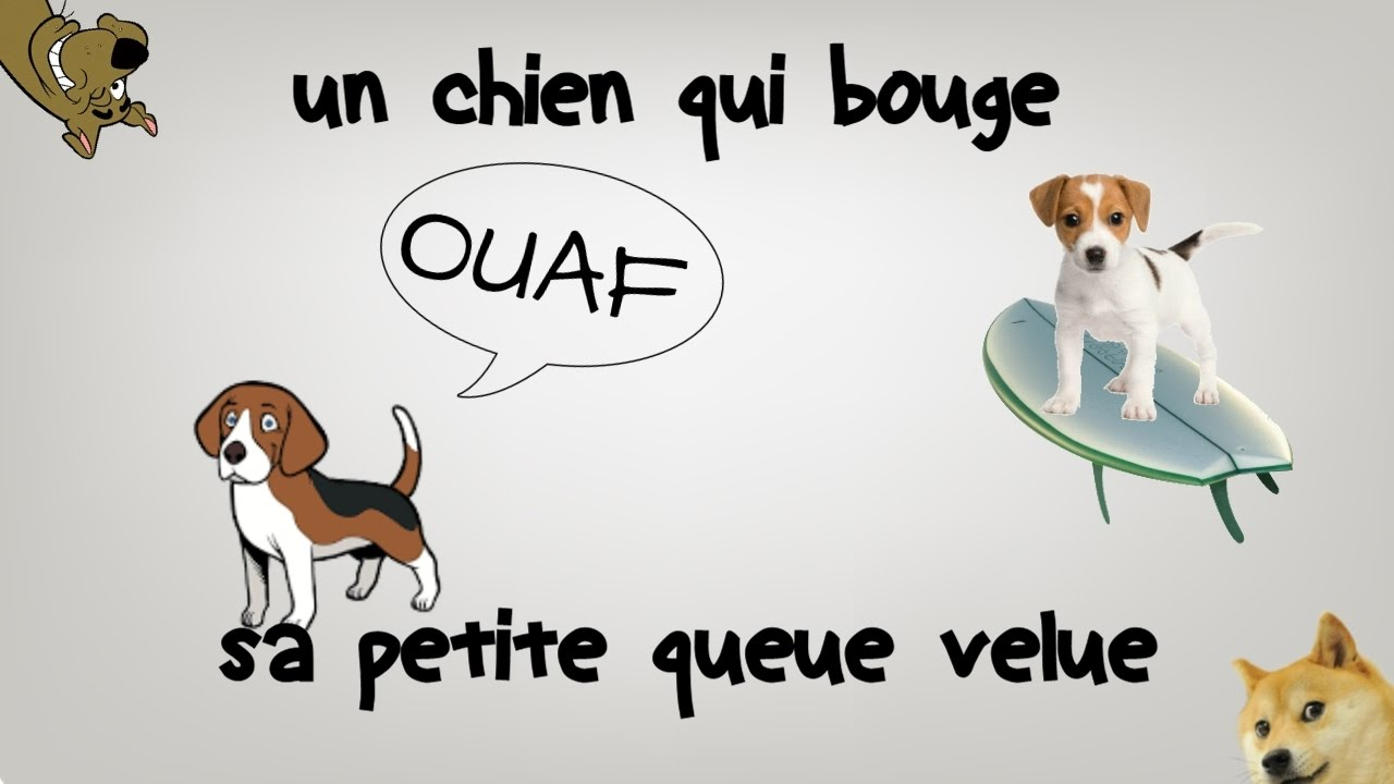 un chien qui bouge sa queue velue