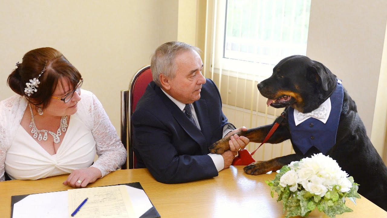 Jealous Rottweiler Best Man Interrupts Wedding With Sneeze