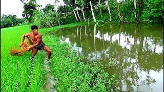 net fishing।Big fish hunting by cast net।Net fishing in the village(part-86)