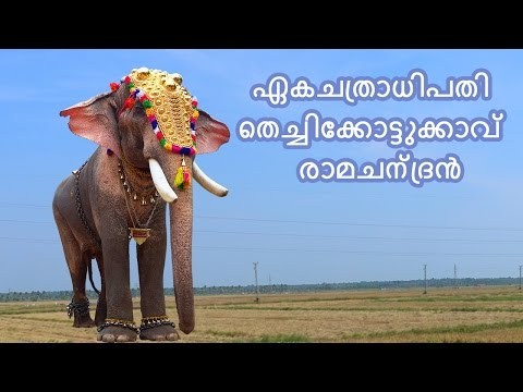 Thechikottukavu Ramachandran New Video
