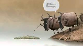cow discussion in stupid way funny cartoon