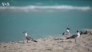 Как молодая юристка ушла из профессии убирать мусор на пляжах Флориды