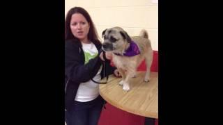 Meet Dexter At The New York Super Pet Adoption
