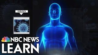 NBC News Learn: Influenza and Flu Vaccines thumbnail