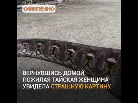 Вопрос: Кот съел змею. Это опасно для него?