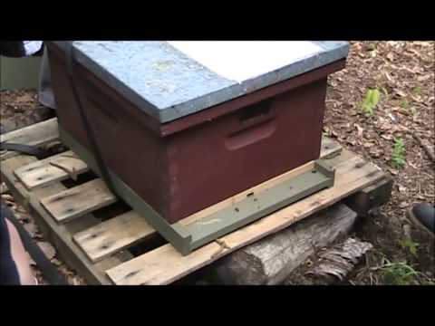 Beekeeping 101 @ Woodstock Union Middle School (Part 2)