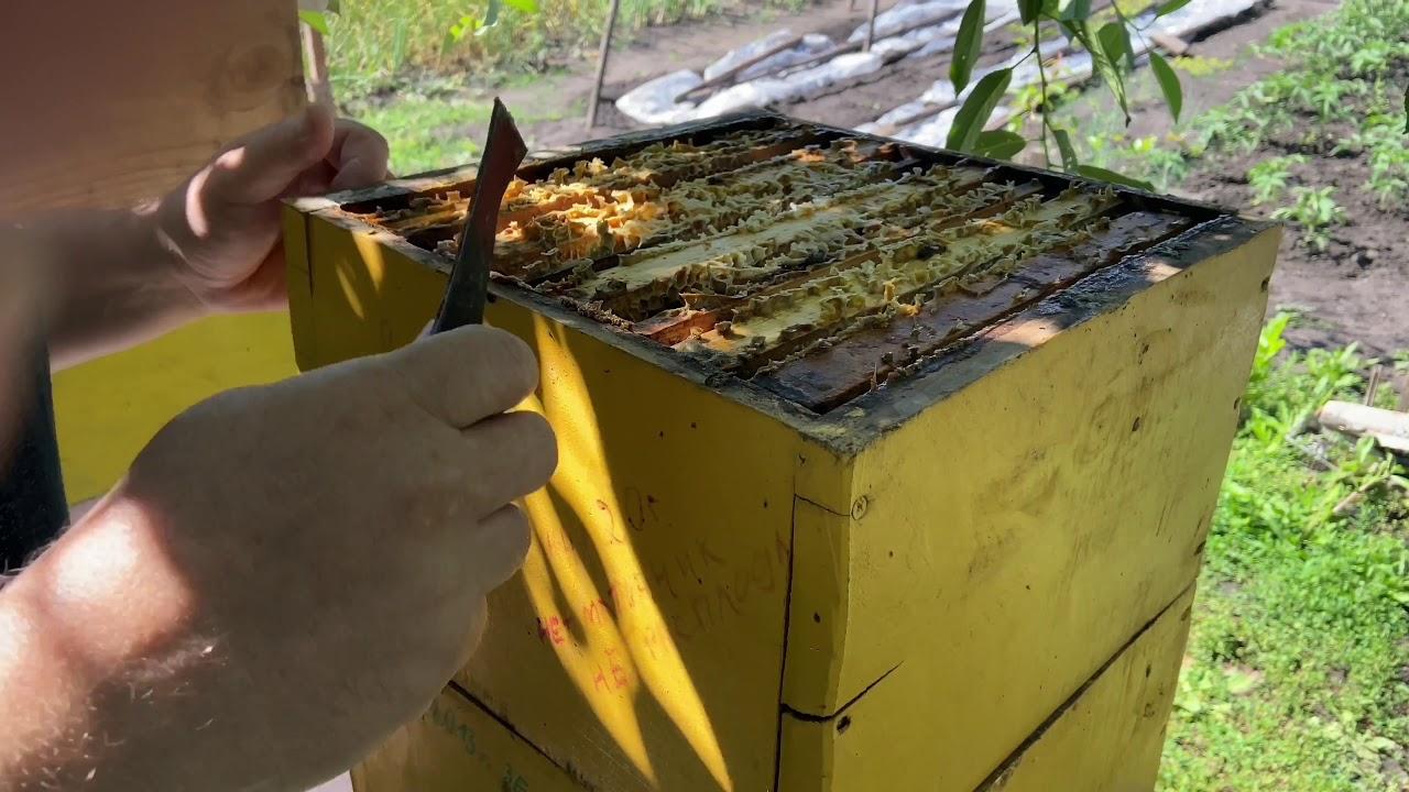 Откачка мёда из Альпийских ульев