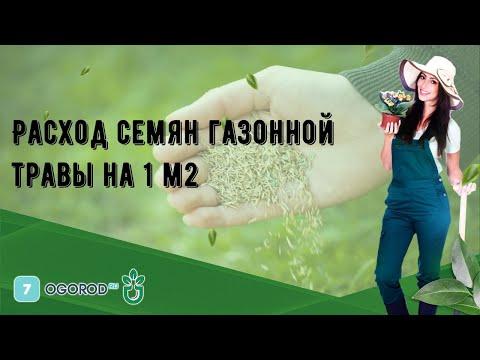 Расход семян газонной травы на 1 м2