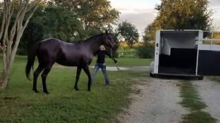 Girl whips her horse cruelly in anger
