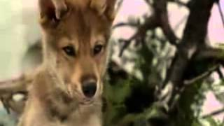 Repeat youtube video white fang