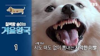 세상에 나쁜 개는 없다 - 철벽왕 솜이의 겨울왕국_#001