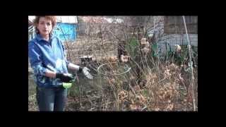 видео Розы после зимы. Сайт sadovymir.ru