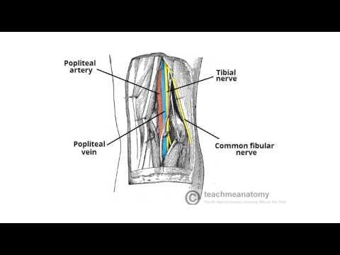 Nerve Block: Quad Sparing Femoral Nerve Block