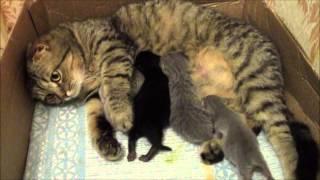 Родились котята