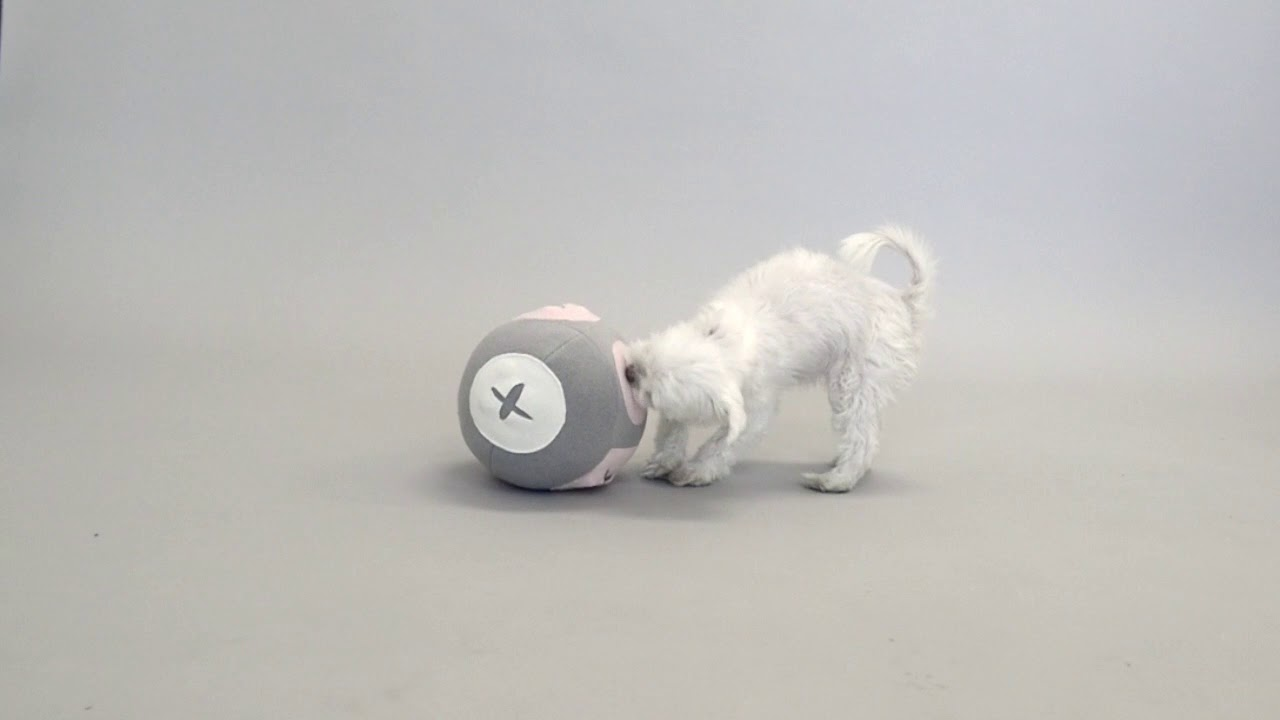 강아지 분리불안, 강아지 노즈워크 스니프 볼