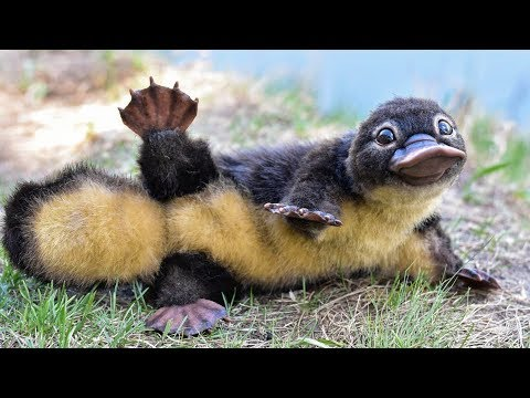 10 Deceptively Cute And Friendly Animals