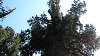 General Sherman Tree, Sequoia National Park, größter baum der welt