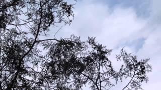 Симферополя  29 апреля  2015(, 2015-04-29T12:53:56.000Z)