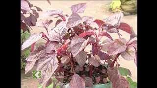 ടെറസിലെ പച്ചക്കറി കൃഷി: Vegetable cultivation in Terrace