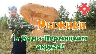 Творим чудеса! Собираем рыжики в Коми-Пермяцком округе!